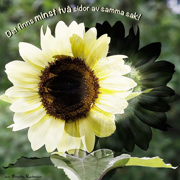 pm_20130729_sunflowerWords