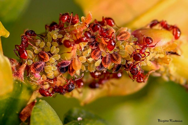 ants_20140628_loss