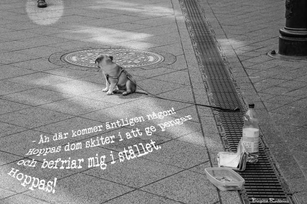 CA4_20150410_puppycruelty