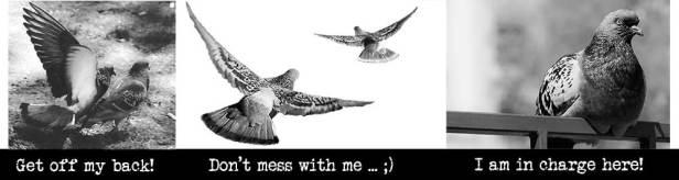 head_doves