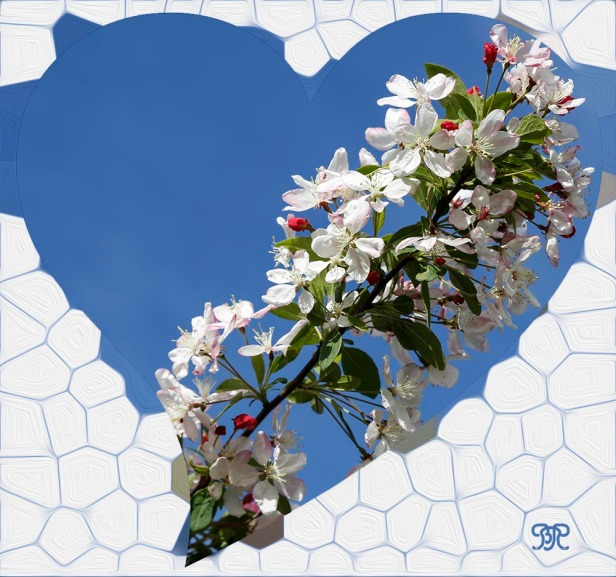 heart_20150416_cherry
