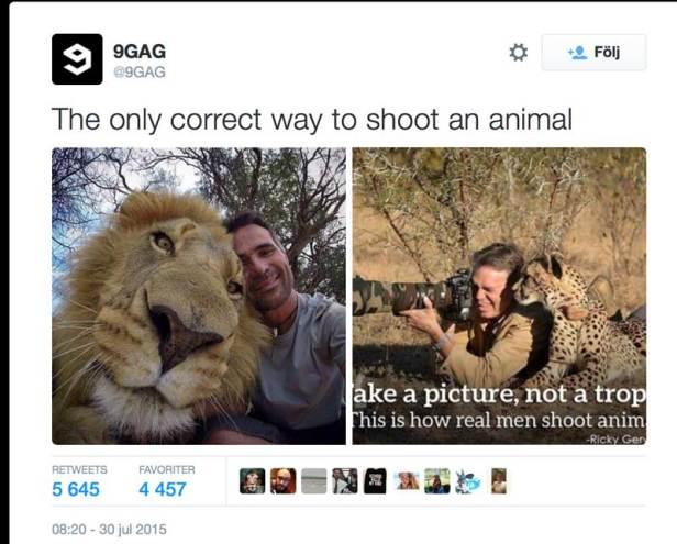 shootinganimalcorrect